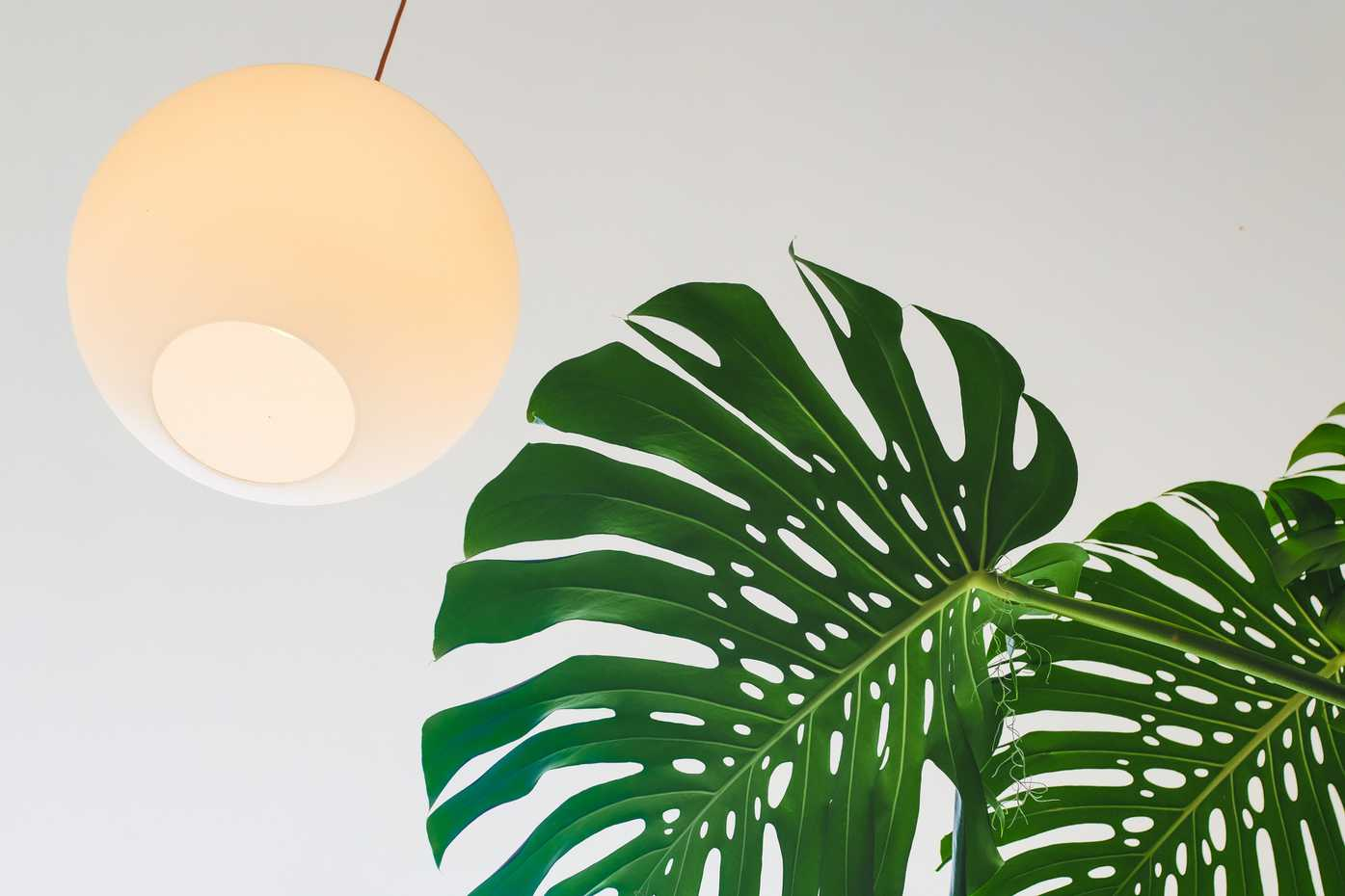 A ceiling light and a large plant leaf